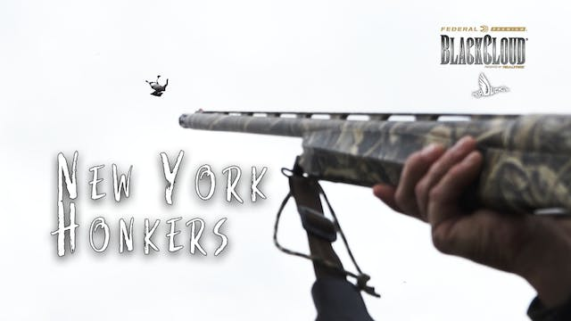 Hunting New York Honkers | Early Goos...