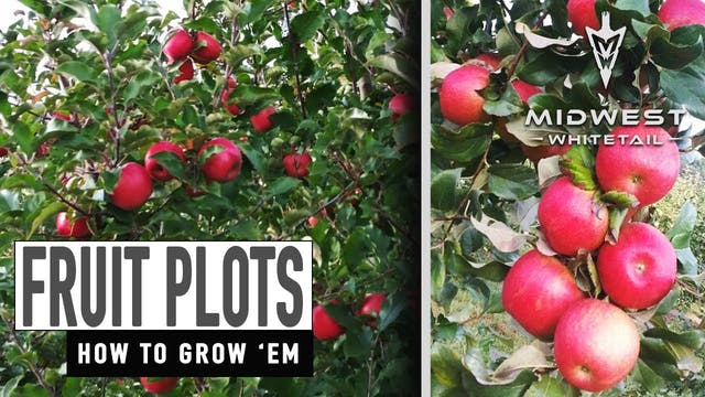 3-26-18: Fruit Plots, Pruning Apple T...