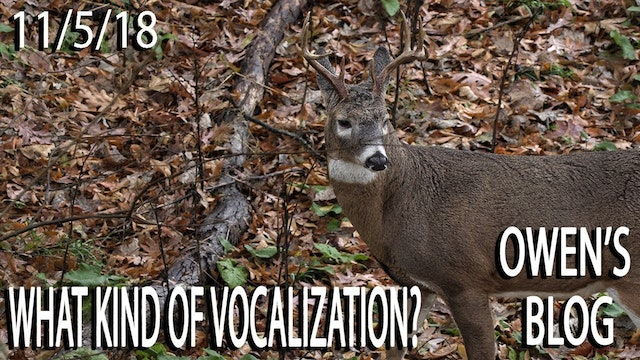 Owen's Blog: Strange Whitetail Vocalization