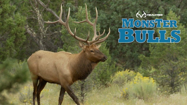 Bugling Bull in New Mexico | Bill Jordan Makes a Perfect Shot!