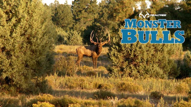 "391"" Arizona Monster 