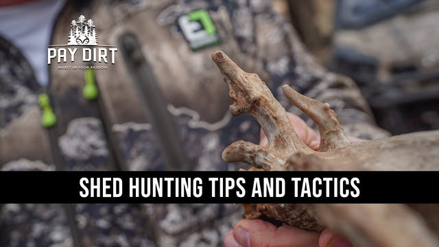 Great Shed Hunting Pro Tips   The Bes...