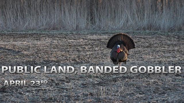 4-23-18: Public Land Tom, Banded Gobbler | Spring Thunder