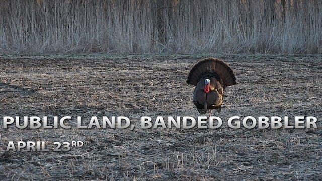 4-23-18: Public Land Tom, Banded Gobb...