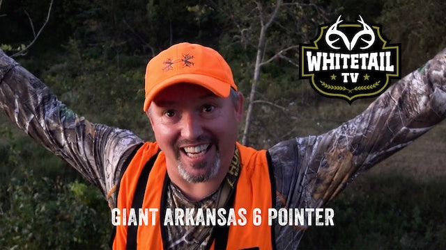 Giant Arkansas 6-pointer and Kentucky Pre-Rut Action