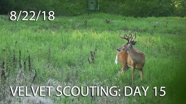 Winke's Blog: Velvet Scouting Day 15