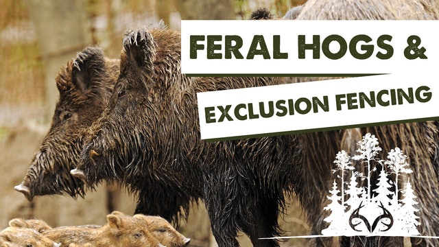 Building Hog Exclusion Fences | Keeping Feral Hogs Away from Feeders | Pay Dirt