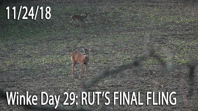 Winke Day 29: Rut's Final Fling