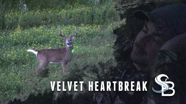 Velvet Heartbreak in Alberta | Pre-Se...