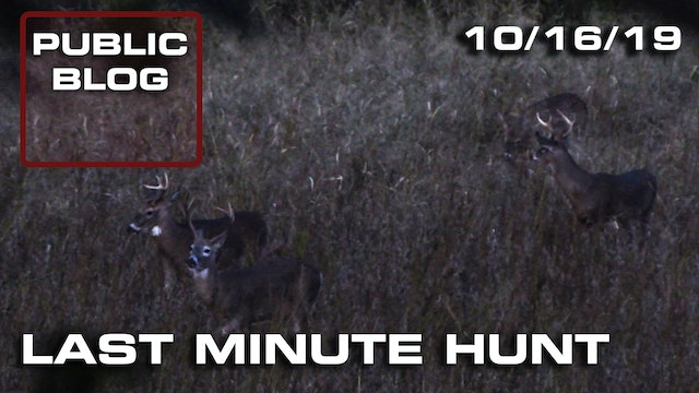 Public Land Blog | Last Minute Hunt, Field Full of Bucks