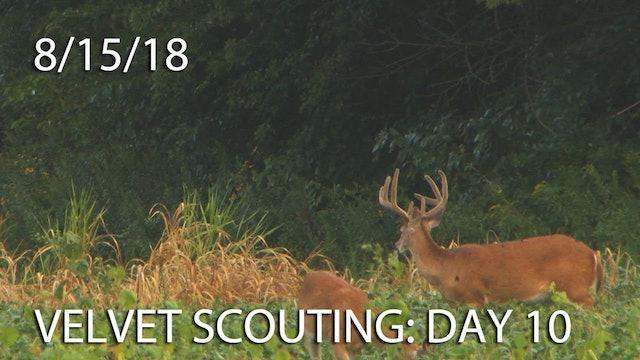 Winke's Blog: Velvet Scouting Day 10