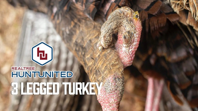 Three-Legged Turkey? | Weird, Odd, Malformed Gobbler | Realtree Hunt United