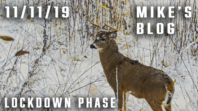 Mike's Blog: Urban Zone, Lockdown Phase