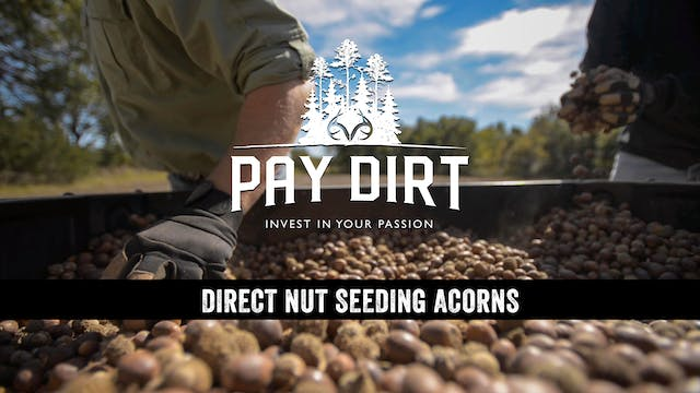 Dig Deeper: Planting Oaks from Acorns