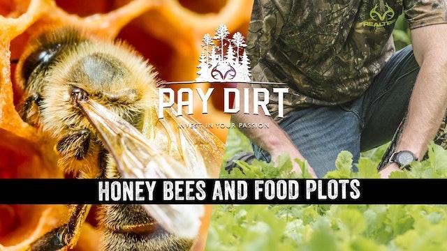 Will Honey Bees Improve Food Plots?