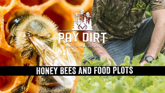 Will Honey Bees Improve Food Plots?