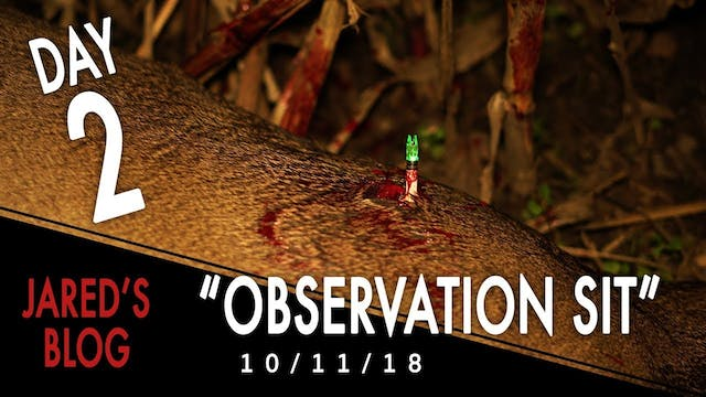 Jared's Blog: Observation Sit