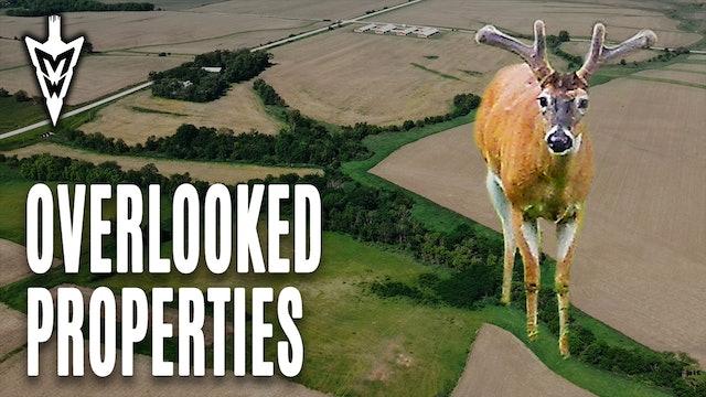Locating Velvet Bucks in Summer, Creating Food Plot Screens | Midwest Whitetail