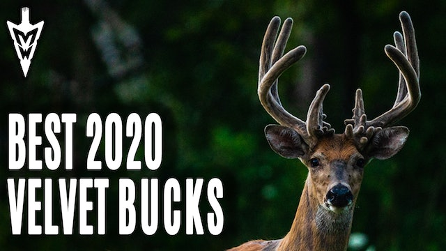 8-31-20: Best Velvet Bucks | Setting Stages for the Opener | Midwest Whitetail