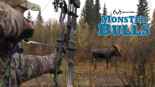 Charging Moose in Canada