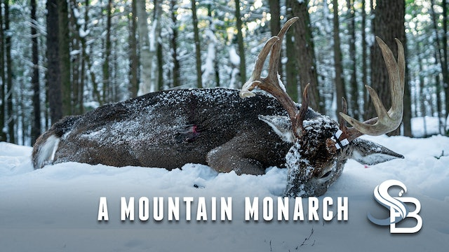 The Mountain King Falls | 8 1/2-Year-Old New Hampshire Monarch | Sea Bucks