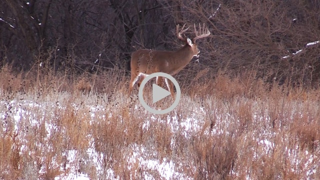 1-1-18: Perfect Late Season Conditions | Midwest Whitetail