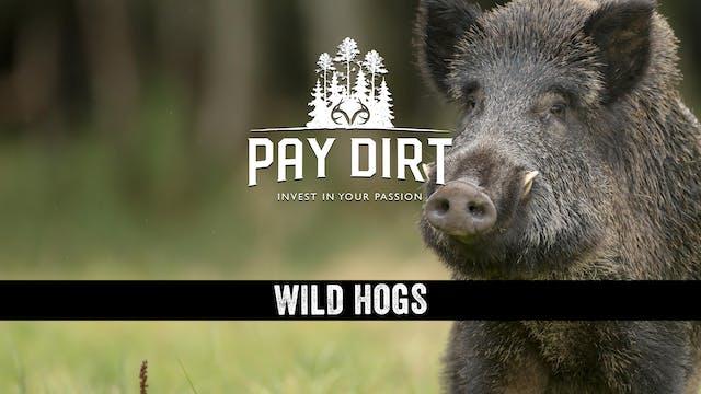 Wild Hogs - Managing Your Land