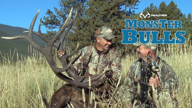 Monster Bull in Colorado | David Blanton Threads The Needle On The Shot