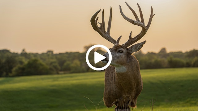 Drake's Blog | Biggest Buck Ever | Whitetail Taxidermy Pickup
