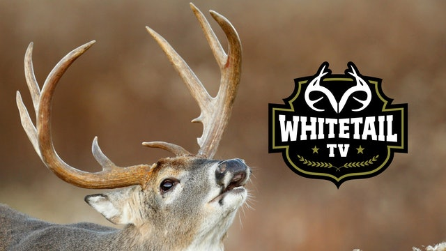 Whitetail TV