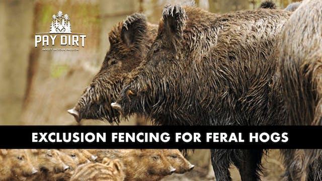 Building Hog Exclusion Fences   Keepi...