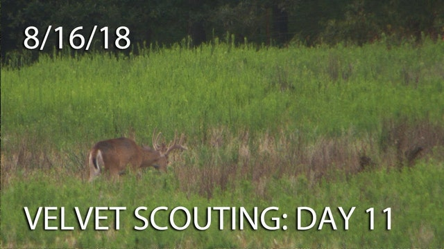 Winke's Blog: Velvet Scouting Day 11
