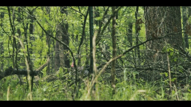 Wet Gobblers Still Gobble | Turkey Hunting in the Rain | DayBreak Outdoors