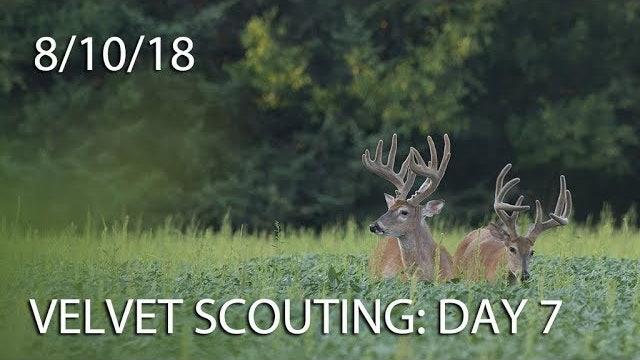 Winke's Blog: Velvet Scouting Day 7
