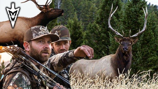 Montana Archery Elk Hunt, Three-Year ...