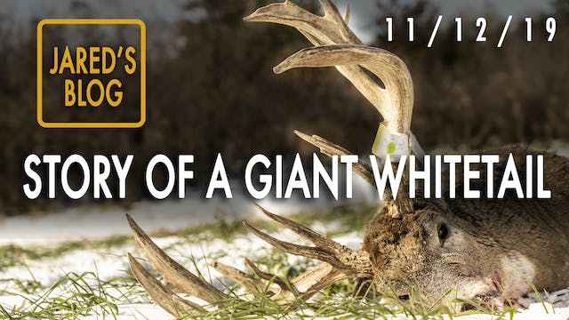 Jared's Blog: Mystery Giant Buck Dead...