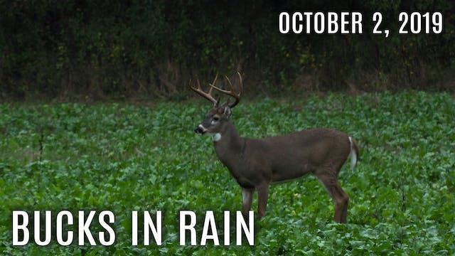 Winke Day 1: First Hunt, Bucks In Rain