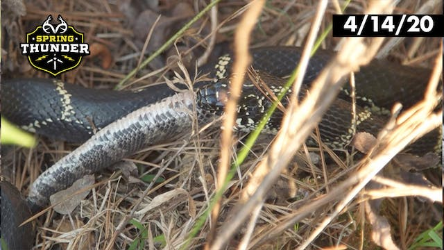 Kingsnake vs. Rattlesnake | Which One...