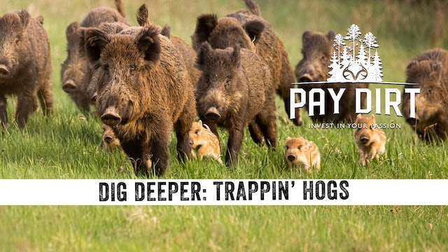 Dig Deeper: Trapping Hogs with Remote Control Traps