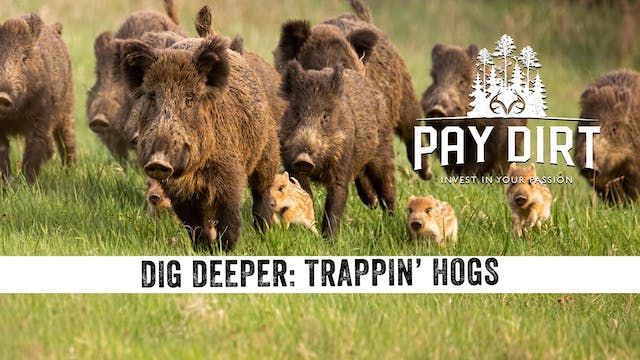 Dig Deeper: Trapping Hogs with Remote...