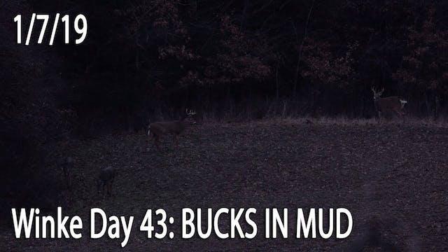Winke Day 43: Bucks in Mud