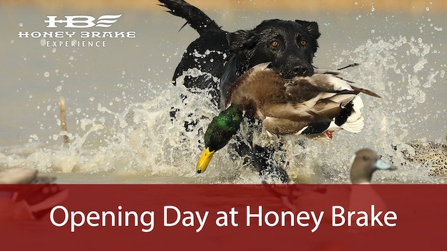 Opening Day of Duck Season at Honey Brake