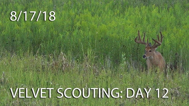 Winke's Blog: Velvet Scouting Day 12