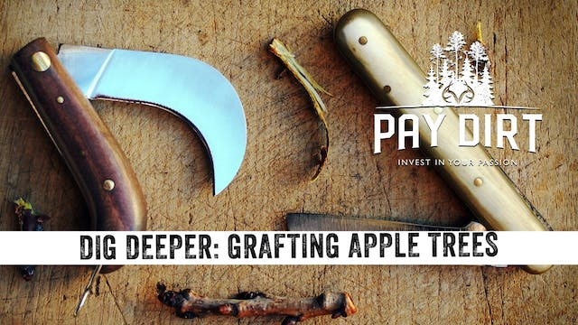 Dig Deeper: Grafting Apple Trees