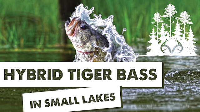 Dig Deeper: Hybrid Tiger Bass for Small Lakes