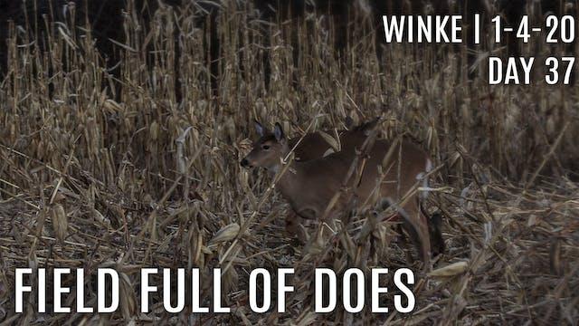 Winke Day 37: A Field Full of Does