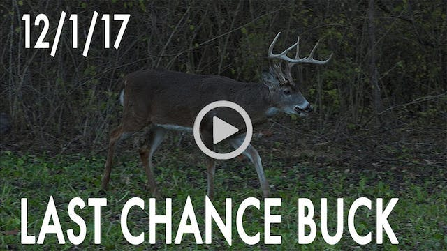 Winke Day 35: Last Chance Buck