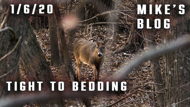 Mike's Blog: Moving In On The Bedding...