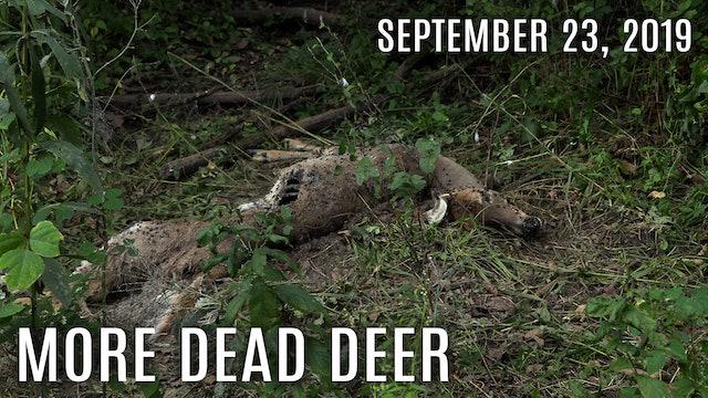 Winke's Blog: Pulling Cards, Dead Deer