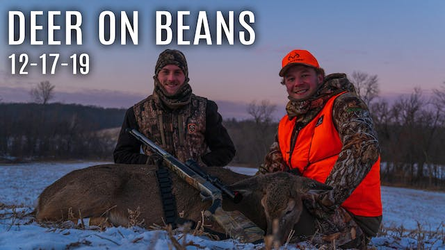 Gun Season Day 1: Deer in the Soybeans